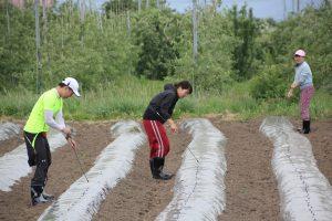 苗植えを手伝いました。